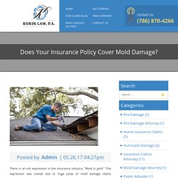 Does Your Insurance Policy Cover Mold Damage? - Korin Law
