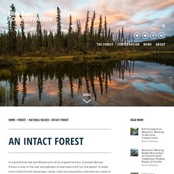 Intact Forest — Boreal Conservation