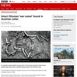 Intact Ottoman 'war camel' found in Austrian cellar - BBC News