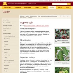 Apple scab : Integrated Pest Management for home apple growers