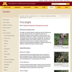 Fire blight : Integrated Pest Management for home apple growers