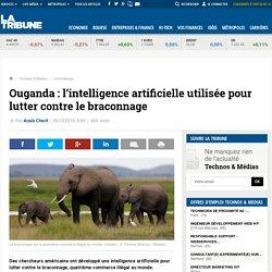Ouganda : l'intelligence artificielle utilisée pour lutter contre le braconnage