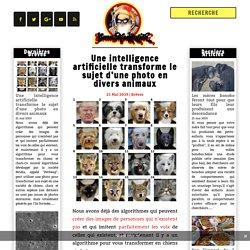 Une intelligence artificielle transforme le sujet d'une photo en divers animaux