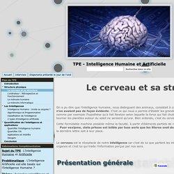 Le cerveau et sa structure - TPE - Intelligence Humaine et Artificielle