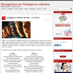 L'intelligence collective animale... un mythe ?