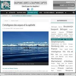L'intelligence des orques et la captivité - Dauphinlibre.be