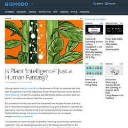Is Plant 'Intelligence' Just a Human Fantasy?