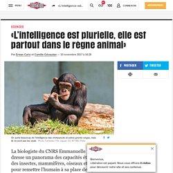 «L'intelligence est plurielle, elle est partout dans le règne animal»
