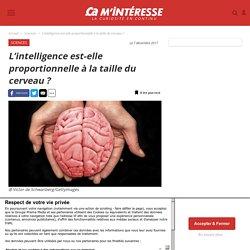 L'intelligence est-elle proportionnelle à la taille du cerveau