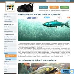 Intelligence et vie sociale des poissons