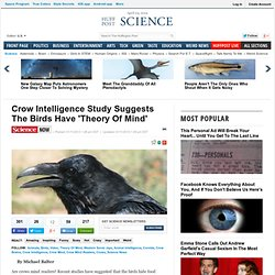 Crow Intelligence Study Suggests The Birds Have 'Theory Of Mind'