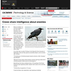 Crows share intelligence about enemies - Technology & Science