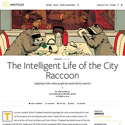 The Intelligent Life of the City Raccoon - Issue 18: Genius