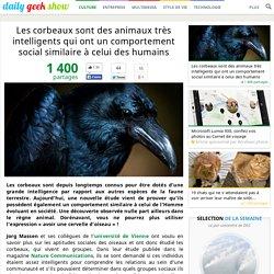 Les corbeaux sont des animaux très intelligents qui ont un comportement social similaire à celui des humains