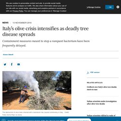 NATURE 13/11/18 Italy's olive crisis intensifies as deadly tree disease spreads - Containment measures meant to stop a rampant bacterium have been frequently delayed.