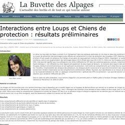 Interactions entre Loups et Chiens de protection : résultats préliminaires