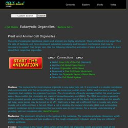 Interactive Eukaryotic Cell Model