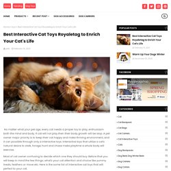 Best Interactive Cat Toys Royaletag to Enrich Your Cat's Life