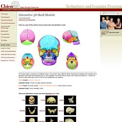 Interactive 3D Skull Module - TLP
