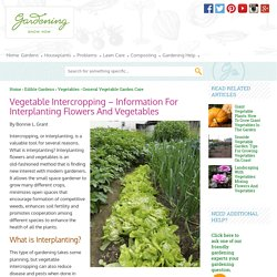 Garden Intercropping: Tips On Interplanting And Intensive Gardening