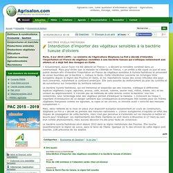 AFP 03/04/15 Bactérie Xylella fastidiosa Interdiction d'importer des végétaux sensibles à la bactérie tueuse d'oliviers