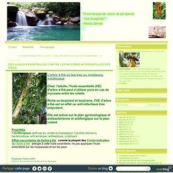 DES HUILES ESSENTIELLES CONTRE LES MYCOSES INTERDIGITALES DES PIEDS - Le blog de surfonwellbeing.over-blog.com