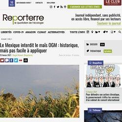 REPORTERRE 15/02/21 Le Mexique interdit le maïs OGM : historique, mais pas facile à appliquer