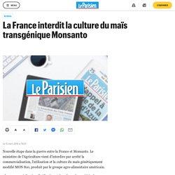 La France interdit la culture du maïs transgénique Monsanto