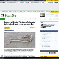 Les anguilles de l'Ariège, pleines de PCB, interdites à la consommation
