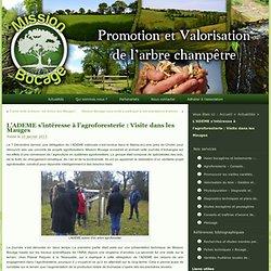 L'ADEME s'intéresse à l'agroforesterie : Visite dans les Mauges