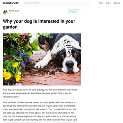 Why your dog is interested in your garden
