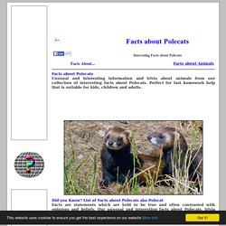 Interesting Facts about POLECATS
