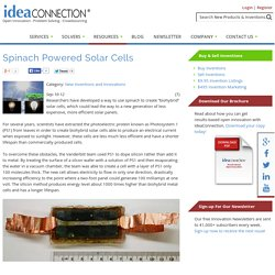 Spinach Powered Solar Cells