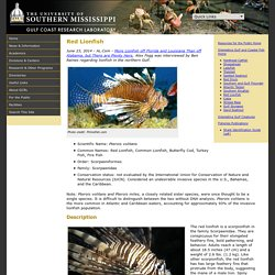 Red Lionfish - Interesting Fishes of the Gulf of Mexico and Coastal Mississippi