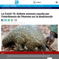 Le Covid-19, énième zoonose causée par l'interférence de l'Homme sur la biodiversité