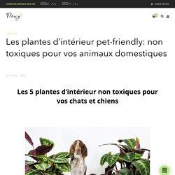 Les plantes d'intérieur pet-friendly: non toxiques pour vos animaux domestiques – Flowy.be