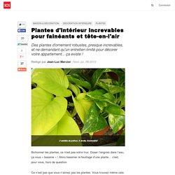 Plantes d'intérieur increvables pour fainéants et tête-en-l'air