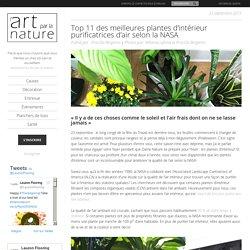 Top 11 plantes intérieur purificatrices d'air