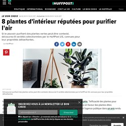 8 plantes d'intérieur réputées pour purifier l'air