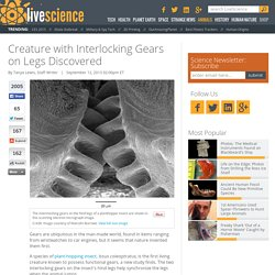 Creature with Interlocking Gears on Legs Discovered