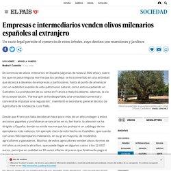 Empresas e intermediarios venden olivos milenarios españoles al extranjero