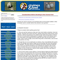 Guinea Fowl International Association - Considerations Before Deciding to Own Guinea Fowl