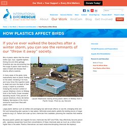 International Bird Rescue -  Our Work -  Research and Education -  How Plastics Affect Birds