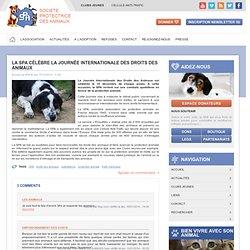 La SPA célèbre la Journée Internationale des Droits des Animaux