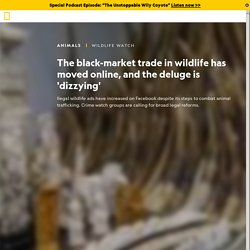NATIONAL GEOGRAPHIC 18/12/20 The black-market trade in wildlife has moved online, and the deluge is 'dizzying'