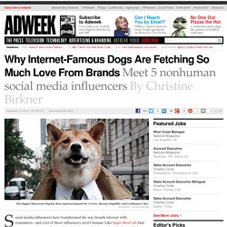 Why Internet-Famous Dogs Are Fetching So Much Love From Brands