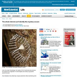 The whole internet can't identify this mystery cocoon - life - 05 September 2013