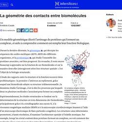 La géométrie des contacts entre biomolécules