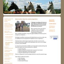 Interventions dans les centres équestres - Site Jimdo de ecuriedelacherbonnais!
