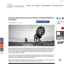 Interview: Extraordinary Up-Close Photos of Kenyan Wildlife by Anup Shah